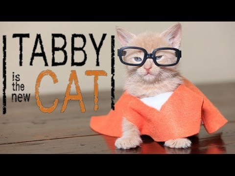 Orange is the New Black: Cat Version?! YES, please!