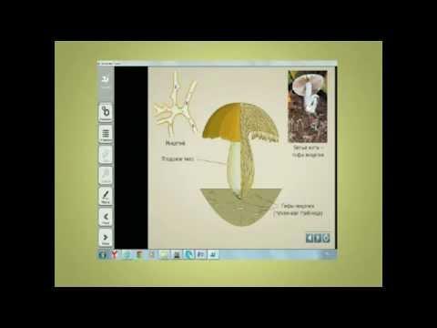 Примеры использования электронных образовательных ресурсов (ЭОР) на уроках биологии (из опыта работы)