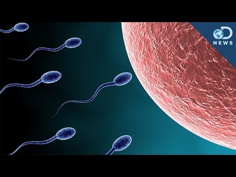 how to get rid of a zygote