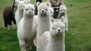Top 10 Cute And Funny Animals