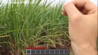 Real Life Minecraft - SUGAR CANE SURPRISE!!