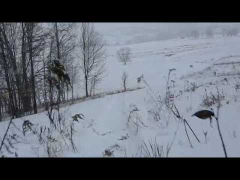 CROW'S NEST SLED RIDE