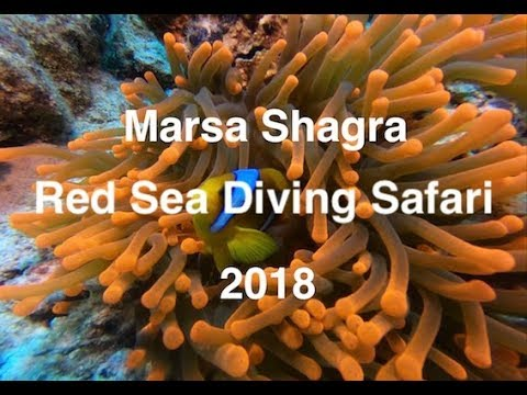 Marsa Shagra May 2018