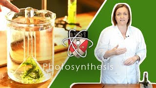 Rate of Photosynthesis
