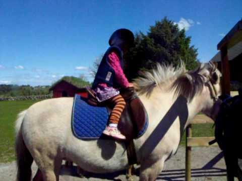 naik kuda somagård stavanger