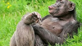 Video Lucu monyet Makan Durian