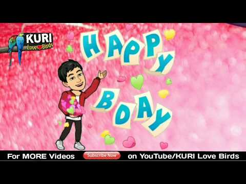 Happy birthday messages - Happy Birthday status  Happy Birthday Song Status  Birthday wish  KURI Love Birds