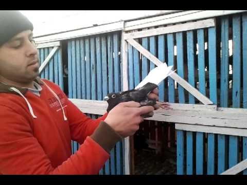 video-2012-01-12-17-08-36.mp4