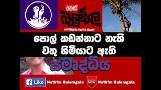 Balumgala 2017 08.15