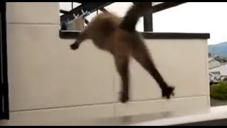 Funny And Stupid Animals 2012-2013