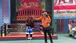 Video Орангутан шоу. 31 января 2012 г. MP3, 3GP, MP4, WEBM, AVI, FLV Juli 2018