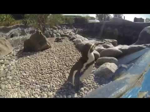 GoPro: Hero 3 Black Edition - Colchester Zoo 2014 720p HD