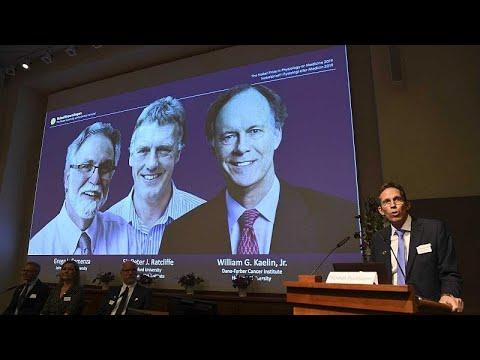 Medizin-Nobelpreis 2019 für William Kaelin, Gregg Sem ...