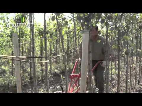 comment traiter les arbres fruitiers contre les vers ? la réponse