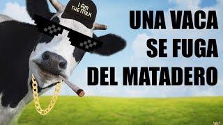 Ver online Una vaca se fuga nadando del Matadero