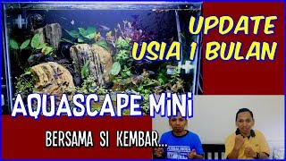 Update Mini Aquascape Cantik - Usia 1 bulan