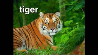 Let's go on a safari! This Baby Einstein video introduces baby to dozens of exotic animals from around the world. In World Animal Adventure, you'll meet pand...