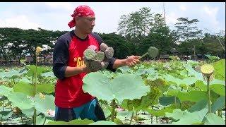 Video Lotus Sumput, Olahan Biji Bunga Lotus   JEJAK SI GUNDUL (29/11/18) PART 1 MP3, 3GP, MP4, WEBM, AVI, FLV Desember 2018