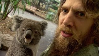 WWE Daniel Bryan Vs. Koalas, Kangaroos And A Goat!