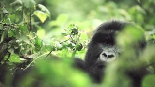 Initial frame of Rwanda video