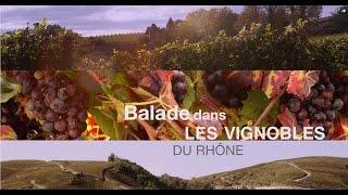 Balade dans les Vignobles du Rhône !