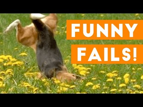 Funniest Pet Fails Compilation September 2018 | Funny Pet Videos