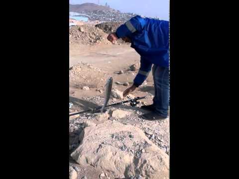 дагестан рыбалка кутум