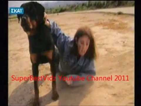 ΣΚΥΛΟΣ ΣΩΖΕΙ ΑΝΑΠΗΡΗ - DOG SAVES DISABLED WOMAN - HD