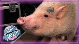 Video ANIMALS GOT TALENT! Intelligent Animals From Around The World! | Top Talent MP3, 3GP, MP4, WEBM, AVI, FLV Agustus 2019