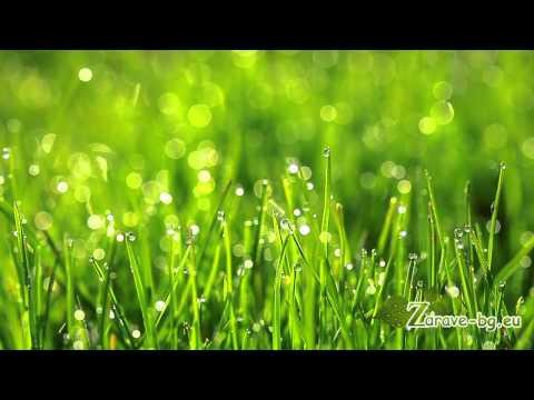 Видео: Медитация на сътворението