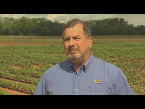 Soybeans planted early in U.S. south