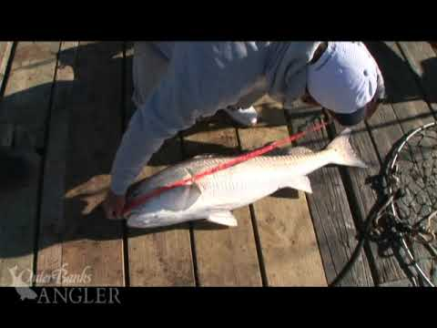 Outer Banks, NC Red Drum Fishing – 2009