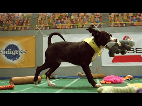 So, How Did Puppy Bowl 2015 Turn Out?
