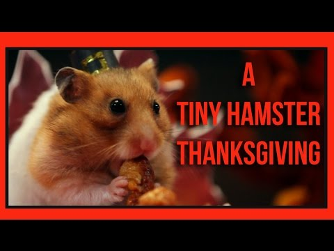 A Tiny Hamster Thanksgiving %28Ep. 4%29