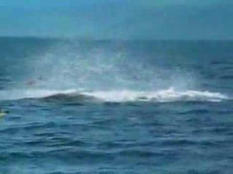 Orca golpeando kayak