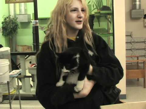 Video of Cat Adoption Team (CAT)