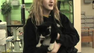 Cat Adoption Team (CAT) YouTube video