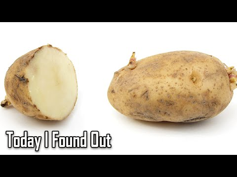 How Potatoes Came to Be Called Spuds