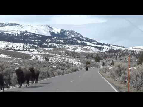 YELLOWSTONE - Although the video tells us little, concerns about the Yellowstone supervolcano have increased since Sunday's biggest earthquake to hit the area in over 30 y...