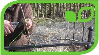 Wie werden die einjährigen Schnurbäume geschnitten?