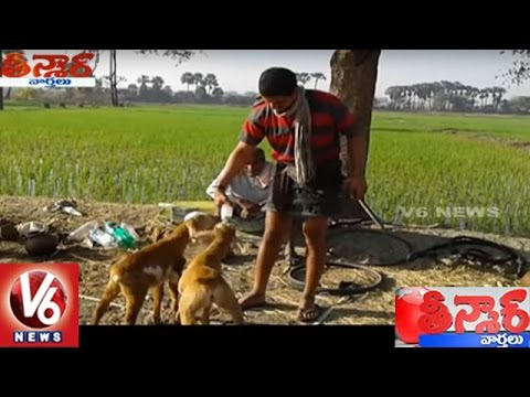 Sheep Drinking Toddy Water In Peddapalli District | Teenmaar News