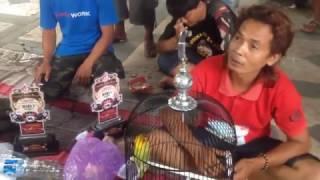 """Video Lovebird Kusumo """"Memanas""""di Kota Sendiri - Lomba para Juara Lovebirds di Klaten MP3, 3GP, MP4, WEBM, AVI, FLV Juni 2018"""