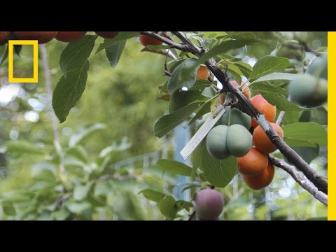 American professor has created a tree that grows 40 different types of fruit!