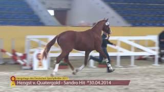 KN 36 v. Quatergold - Sandro Hit Im Lot der 14.Hengsttage des Deutschen Sportpferdes vom 26. - 28. Januar 2017 in...