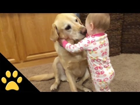 dogs - In this cute dog and baby video, tune in to se some precious and hilarious moments between dogs , puppies, babies, and toddlers. Precious. SUBSCRIBE TO PETSA...