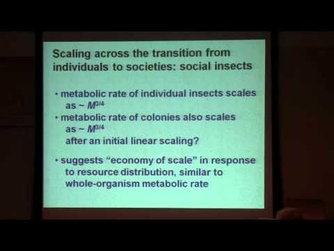 Dr. James H. Brown - 'Entgegenkommen einer  Theorie von metabolischer Ökologie '