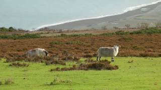 Exmoor National Park United Kingdom  city photos gallery : ENGLAND Exmoor national park (hd-video)