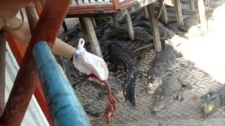 Samutprakan Crocodile Farm&Zoo, Bangkok, Thailand