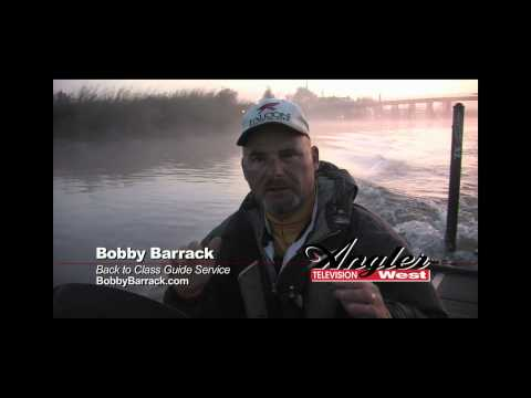 Top water delta stripers with bobby