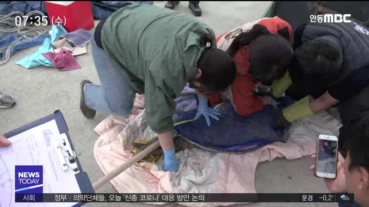 R]동해안 어린 '점박이물범' 잇단 출현‥이유는?